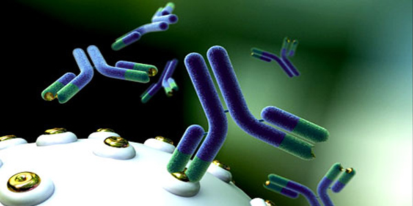 Адаптивен имунолошки систем (стекнат имунитет) - Што е тоа?