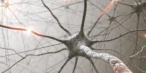 Нервен систем - Што е тоа, Функционалност, Поделба, ...?